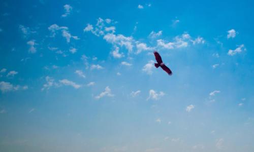 Adler 2